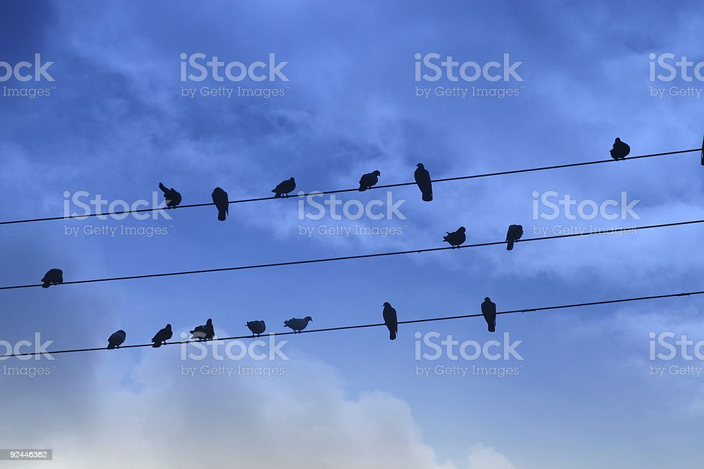 Pigeons On Wires stock photo
