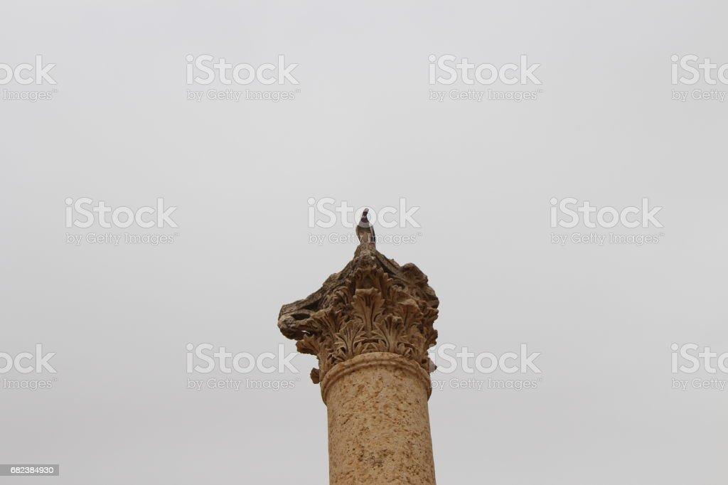 Pigeons royaltyfri bildbanksbilder
