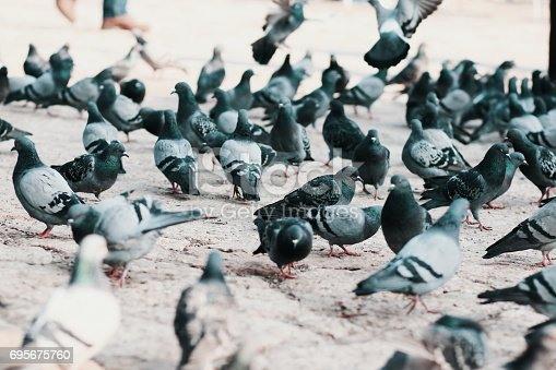 a group of pigeon on the street