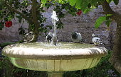 4 pigeons sit on a water fountain, bathing and drinking to cool themselves in the summer heat.