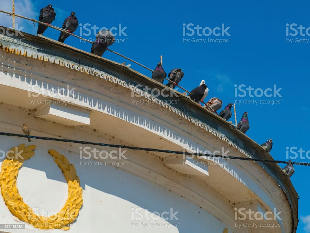Pigeons sit on the edge of the building roof royalty-free stock photo