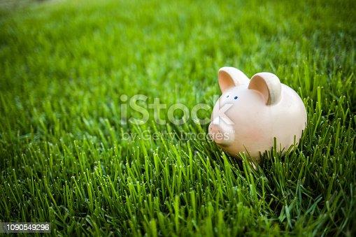 piggy bank grass field outdoor