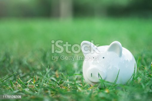 Banking, Business, Investment, Piggy Bank, Grass