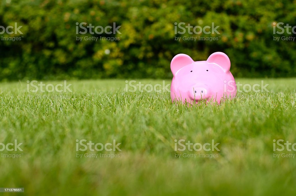 Piggy Bank In Middle Of Grass royalty-free stock photo