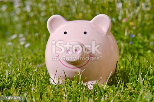 Piggy bank surrounded by green meadow