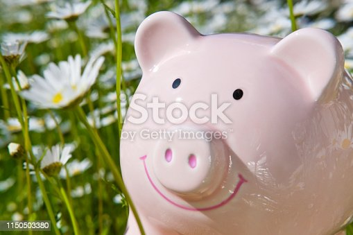 Piggy bank surrounded by spring flowers (daisies)