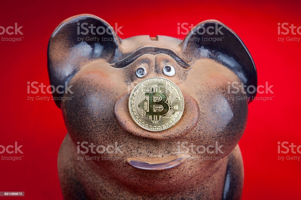 Piggy bank with a coin of electronic crypto currency bitcoin. stock photo