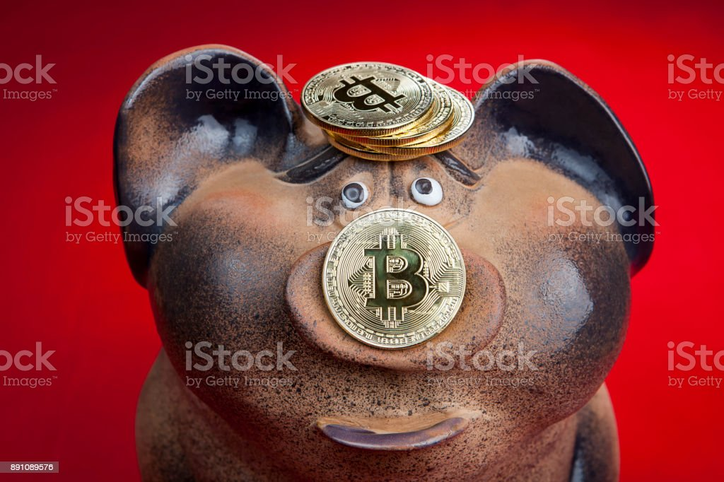 Piggy bank with gold coin bitcoin on pig piglet. stock photo