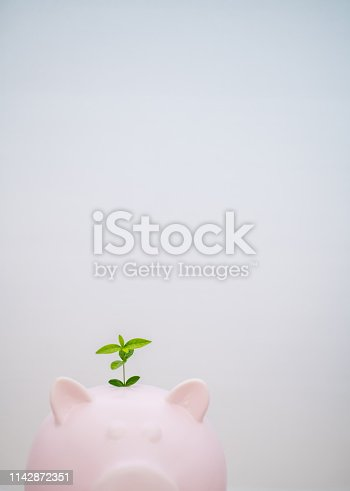 Piggy bank with plant on top.