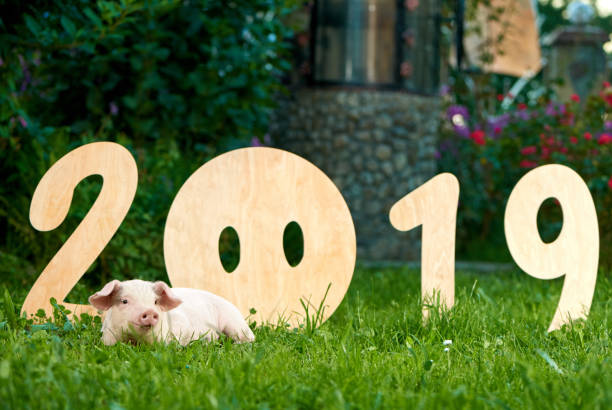 Piggy lying on green grace, near decorative numbers of 2019. stock photo