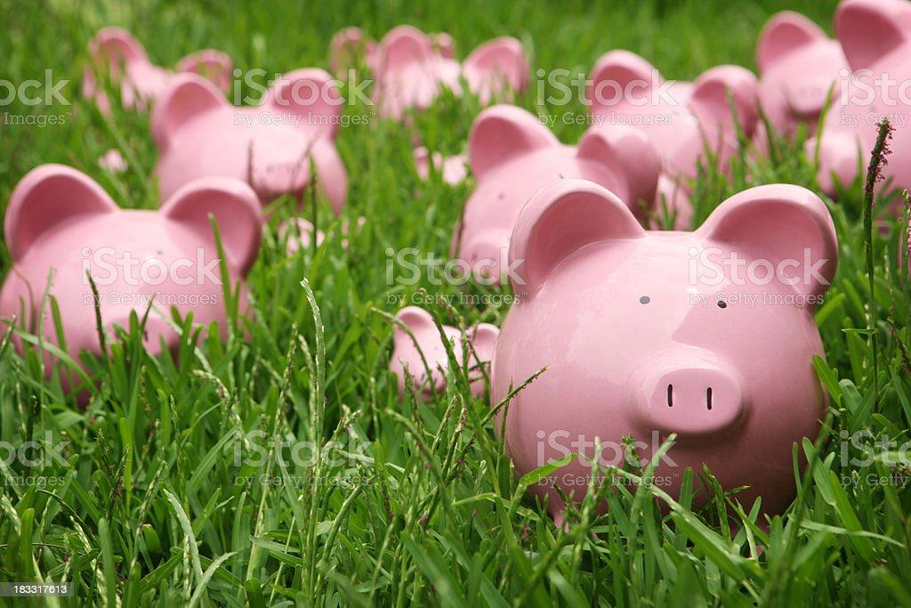 Piggys in the Grass Piggybanks in grass Bank Account Stock Photo