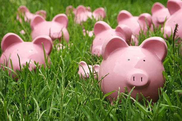 Piggys in the Grass stock photo