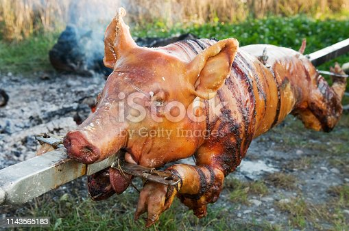 Piglet roasting on an open fire impaled on on skewer. Traditional food, holidays, picnic and veganism concepts