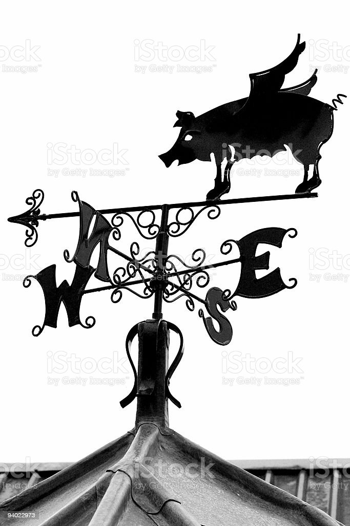 Pigs might Fly ! stock photo