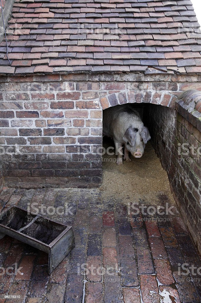 pigsty royalty-free stock photo