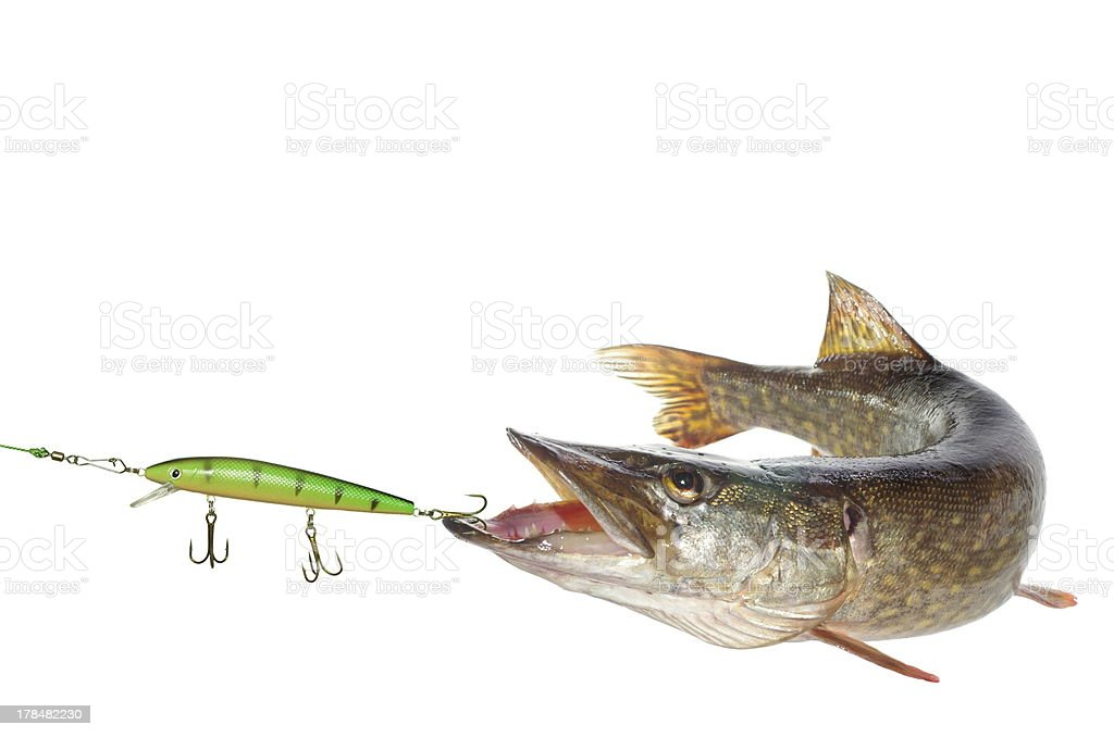 pike and artificial bait stock photo