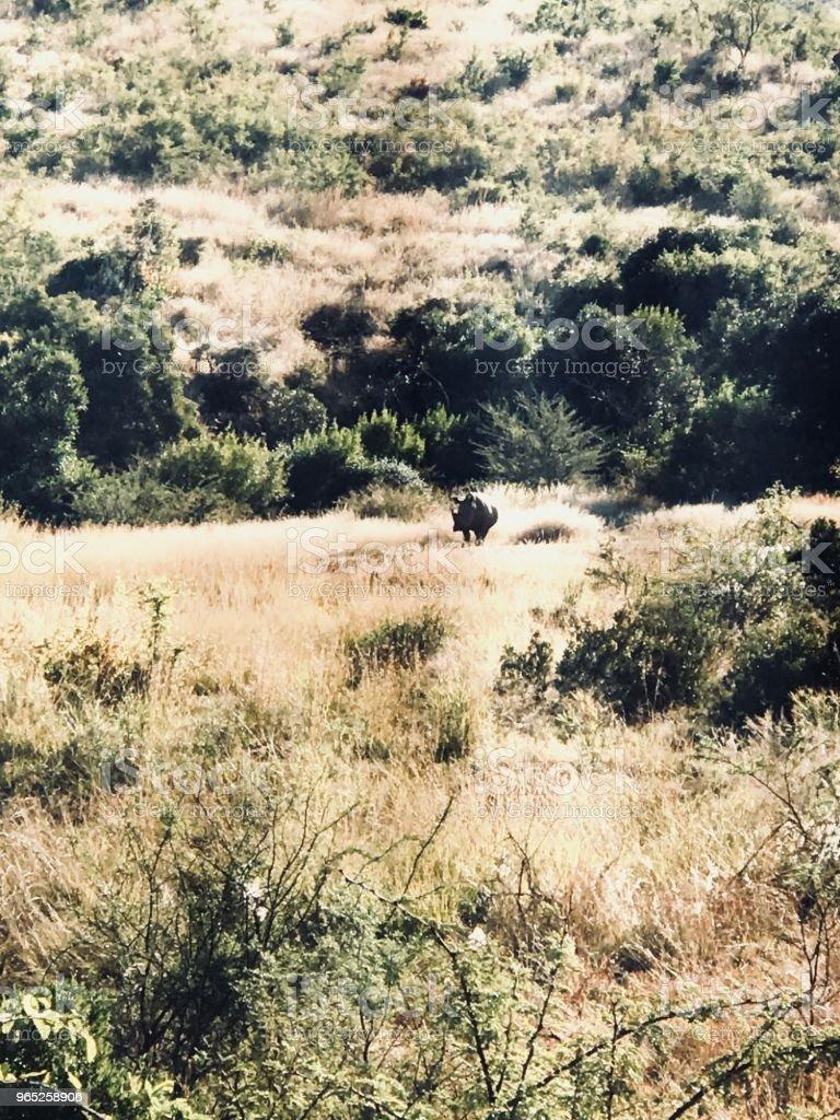 Pilanesberg Rhino zbiór zdjęć royalty-free