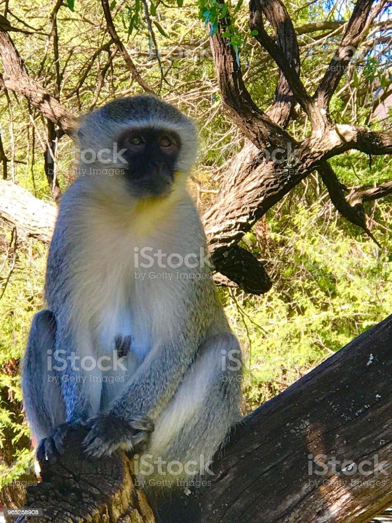 Pilanesberg Safari zbiór zdjęć royalty-free
