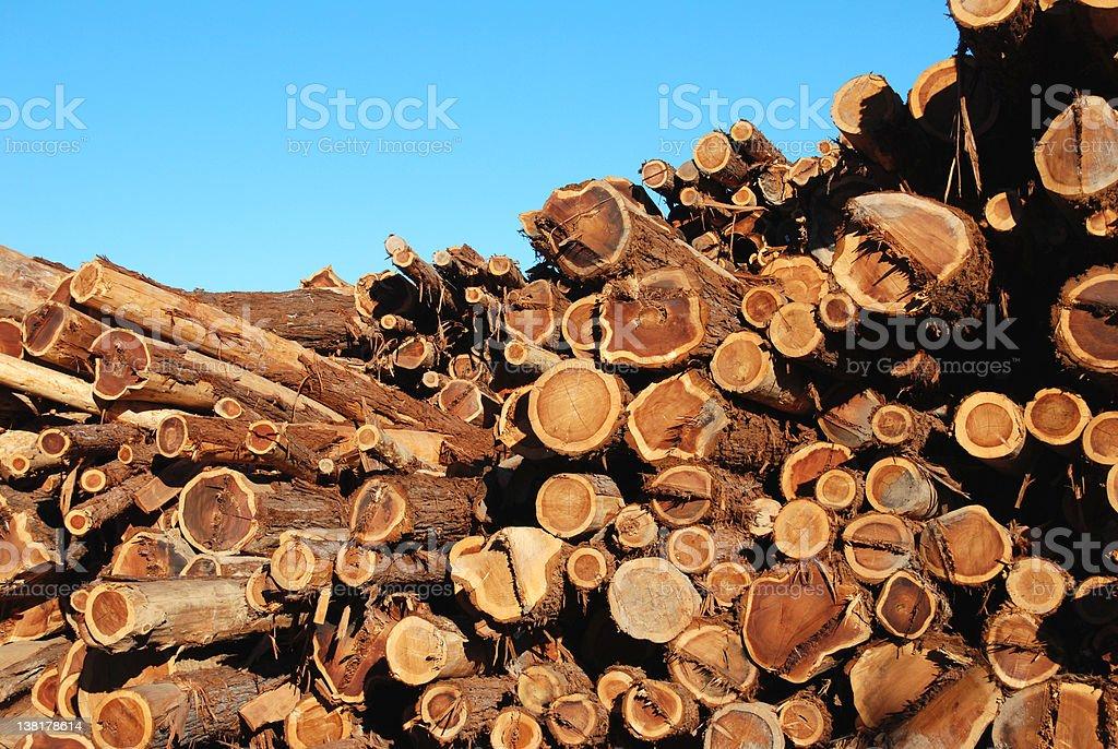 Pile fo Redwood trees stock photo