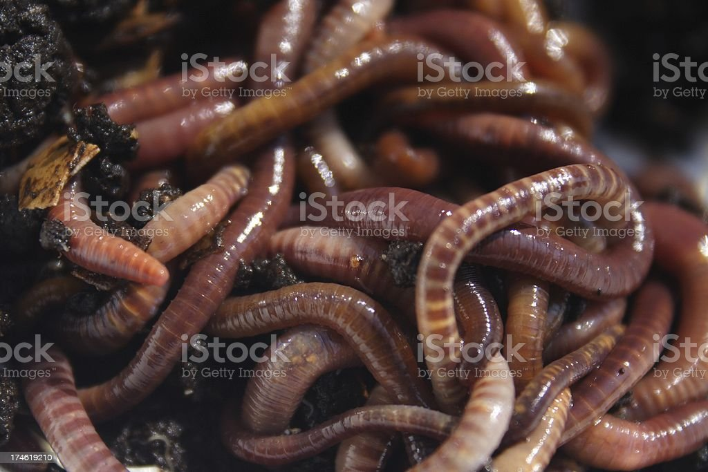 Pile o' Worms royalty-free stock photo