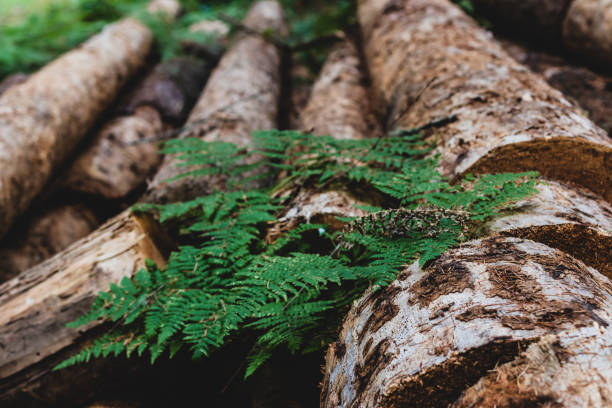Pile of aged weathered worn old logs 4 stock photo