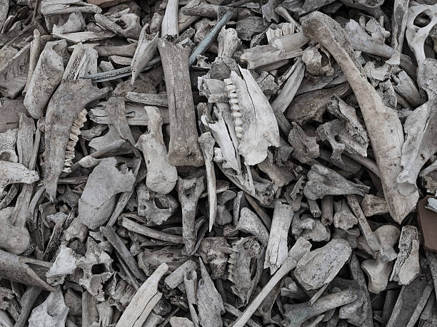Pile of animal bones stock photo