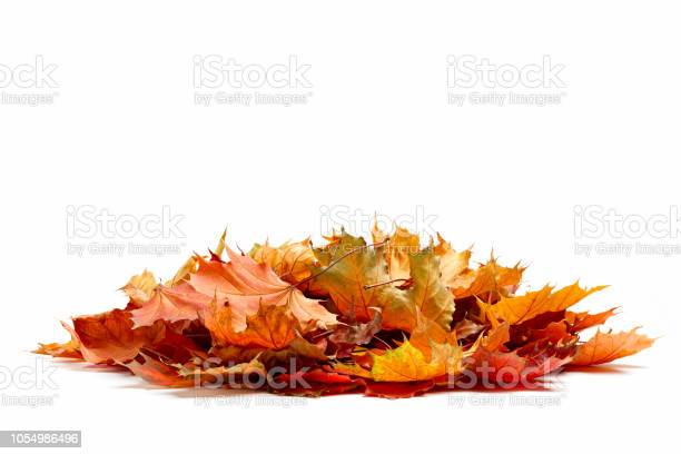Pile of autumn colored leaves isolated on white backgrounda heap of picture id1054986496?b=1&k=6&m=1054986496&s=612x612&h=od0vljgez0xekx4tkse dcr4wqqdgp1qotqncjuhtfu=