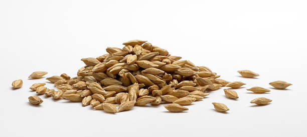 pile of barley - barley stock pictures, royalty-free photos & images