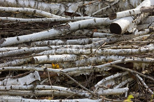 Pile of birch branches