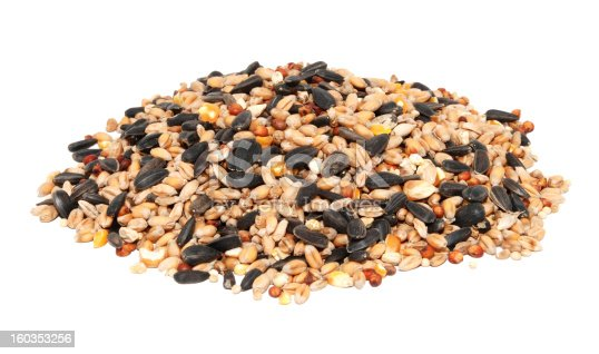 Pile of bird seed including sunflower seeds, wheat and maize, isolated on a white background