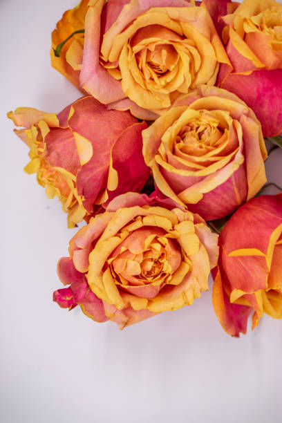 pile of blooms from above on white stock photo