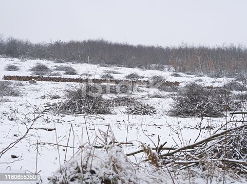 Pile of Branches and Logs on a Snow Covered Hillside