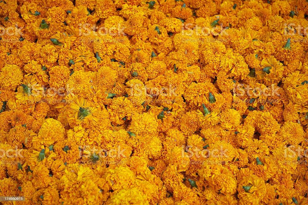 Pile of Bright Orange Marigold Flowers Full Frame royalty-free stock photo