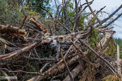 pile of broken branches trunk trees blockage storm closeup background forest cleaning hurricane