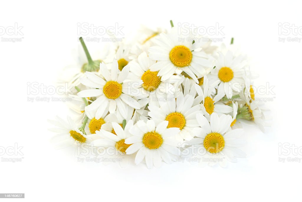 pile of camomille flowers royalty-free stock photo