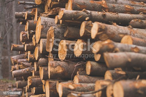Pile of chopped tree trunks in winter forest