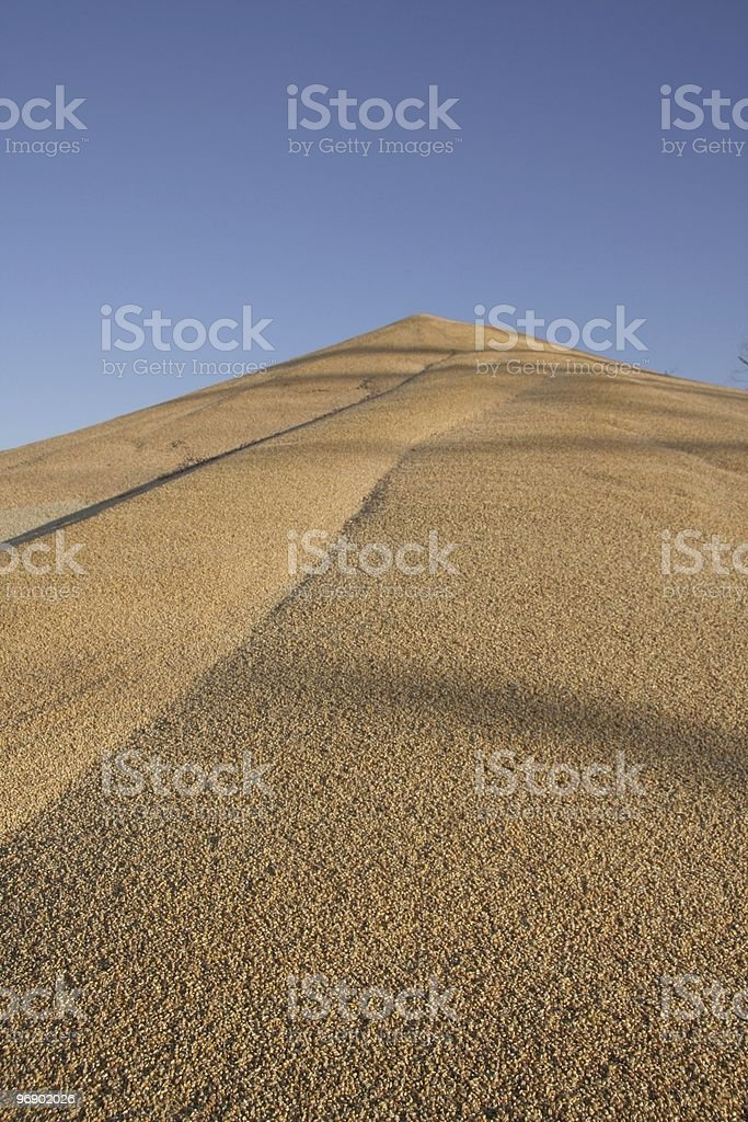 Pile of corn on ground royalty-free stock photo