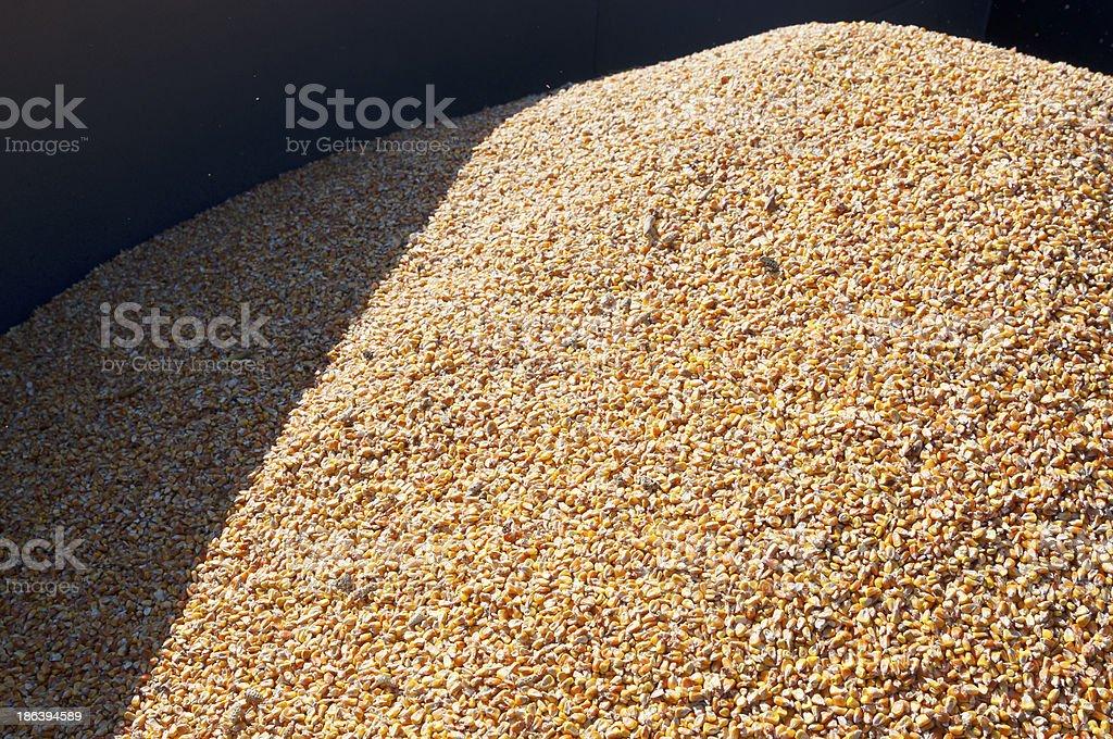 Pile of corn royalty-free stock photo