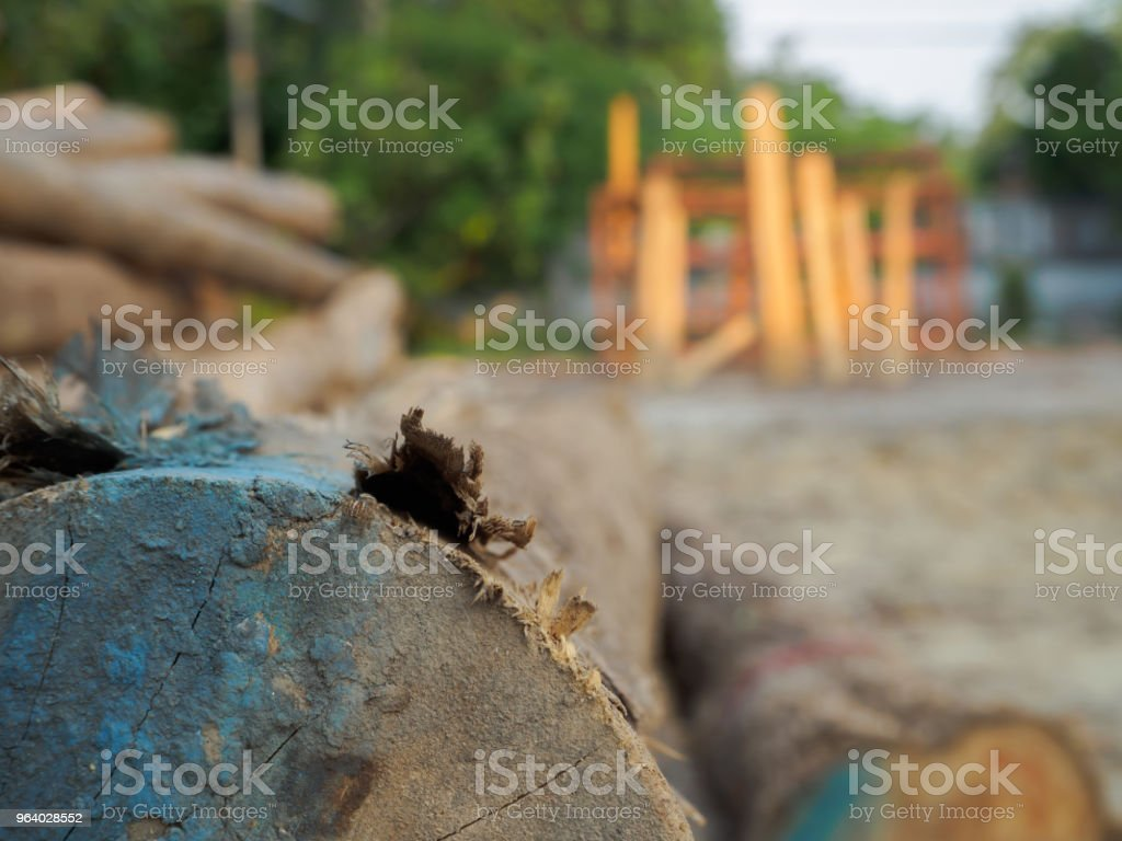 A pile of cut teak trees in the woods for a background. - Royalty-free Abstract Stock Photo