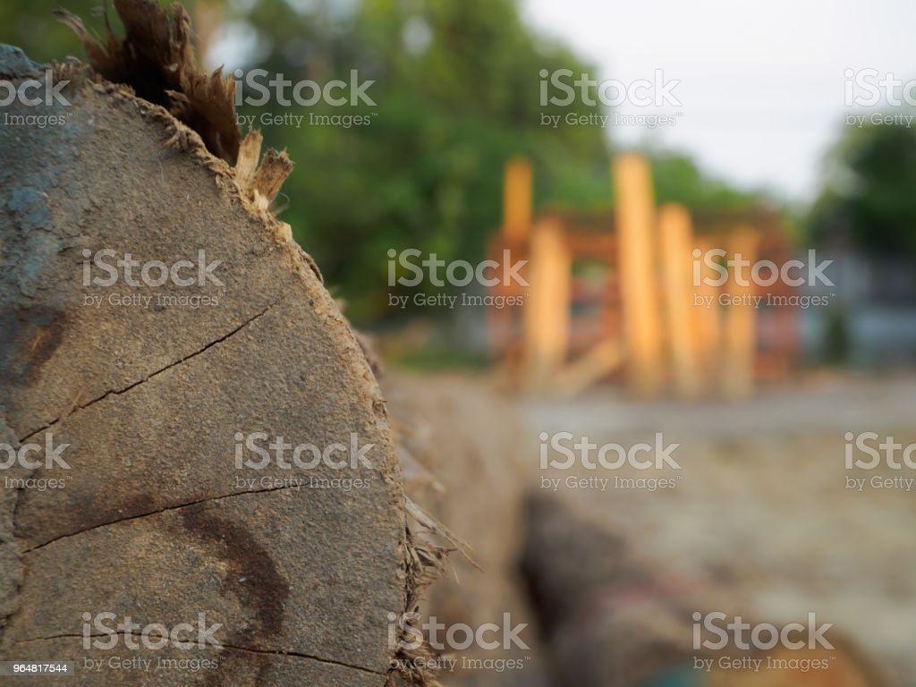 A pile of cut teak trees in the woods for a background. royalty-free stock photo