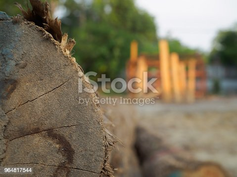 A Pile Of Cut Teak Trees In The Woods For A Background Stock Photo & More Pictures of Abstract