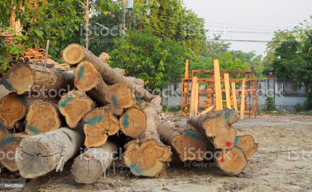 A pile of cut teak trees in the woods - Royalty-free Abstract Stock Photo