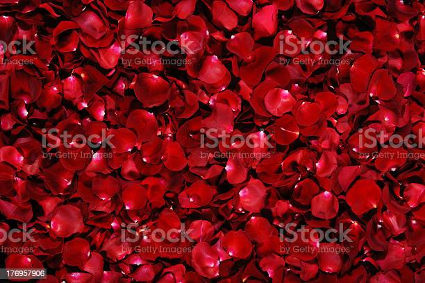Pile of dark red rose petals with white tips picture id176957906?b=1&k=6&m=176957906&s=612x612&h=se78dazrsrbglcwihtkmnoi9mt0xop8y2hnszrm w5u=