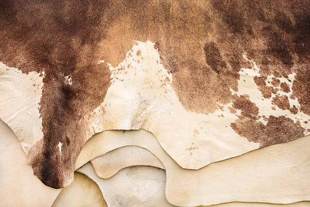 Pile of different cow hides Pile of different brown with white cow hides cowhide stock pictures, royalty-free photos & images