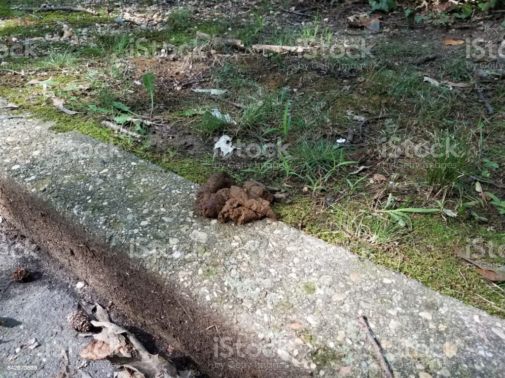 pile of dog poop on a cement curb stock photo