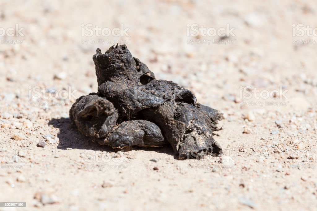 Pile of dog poop stock photo