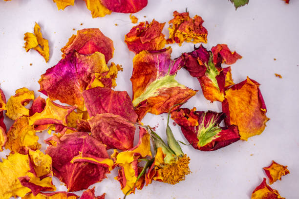 pile of dried rose pieces stock photo