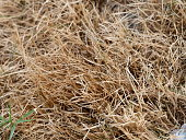 Pile of dry grass on the field