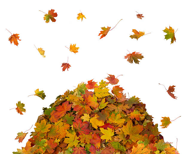 Royalty Free Pile Of Leaves Pictures, Images and Stock ...