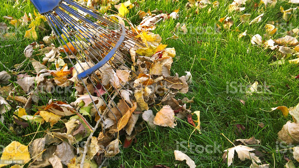 Pile of fall leaves with fan rake on lawn stock photo